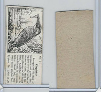 T0-0 Typhoo Tea, Common British Birds, 1955, #14 Kingfisher