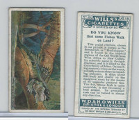 W62-127a Wills, Do You Know, 1922, #18 Fishes Walk on Land?