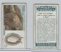 W62-127a Wills, Do You Know, 1922, #27 Limpet Clings to a Rock?