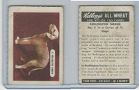 FC9-2 Kellogg's, General Interest - Dogs, 1946, #4 Bedlington Terrier