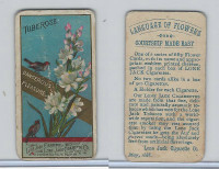 N366 Lone Jack, Language of Flowers, 1887, Tuberose