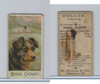 N375 H. Ellis, Breeds of Dogs, 1890, Collie