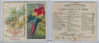 N38 Allen & Ginter, Birds of the Tropics, 1889, Red And Blue Macaw