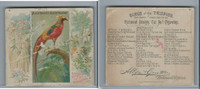 N38 Allen & Ginter, Birds of the Tropics, 1889, Black Throated Pheasant