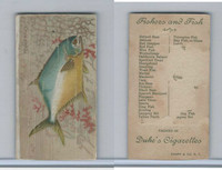 N74 Duke, Fishers and Fish, 1888, Pompano (Trimmed)