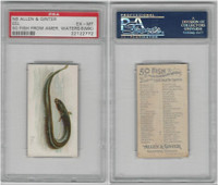 N8 Allen & Ginter, Fish From American Waters, 1889, Eel, PSA 6 MK EXMT