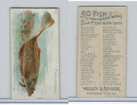 N8 Allen & Ginter, Fish From American Waters, 1889, Flounder