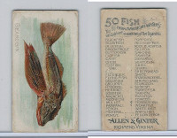 N8 Allen & Ginter, Fish From American Waters, 1889, Searobin