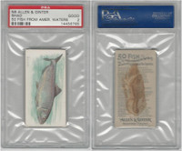 N8 Allen & Ginter, Fish From American Waters, 1889, Shad, PSA 2 Good