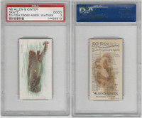N8 Allen & Ginter, Fish From American Waters, 1889, Skate, PSA 2 Good