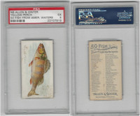 N8 Allen & Ginter, Fish From American Waters, 1889, Yellow Perch, PSA 5 EX