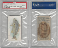 N8 Allen & Ginter, Fish From American Waters, 1889, Chub, PSA 2 Good