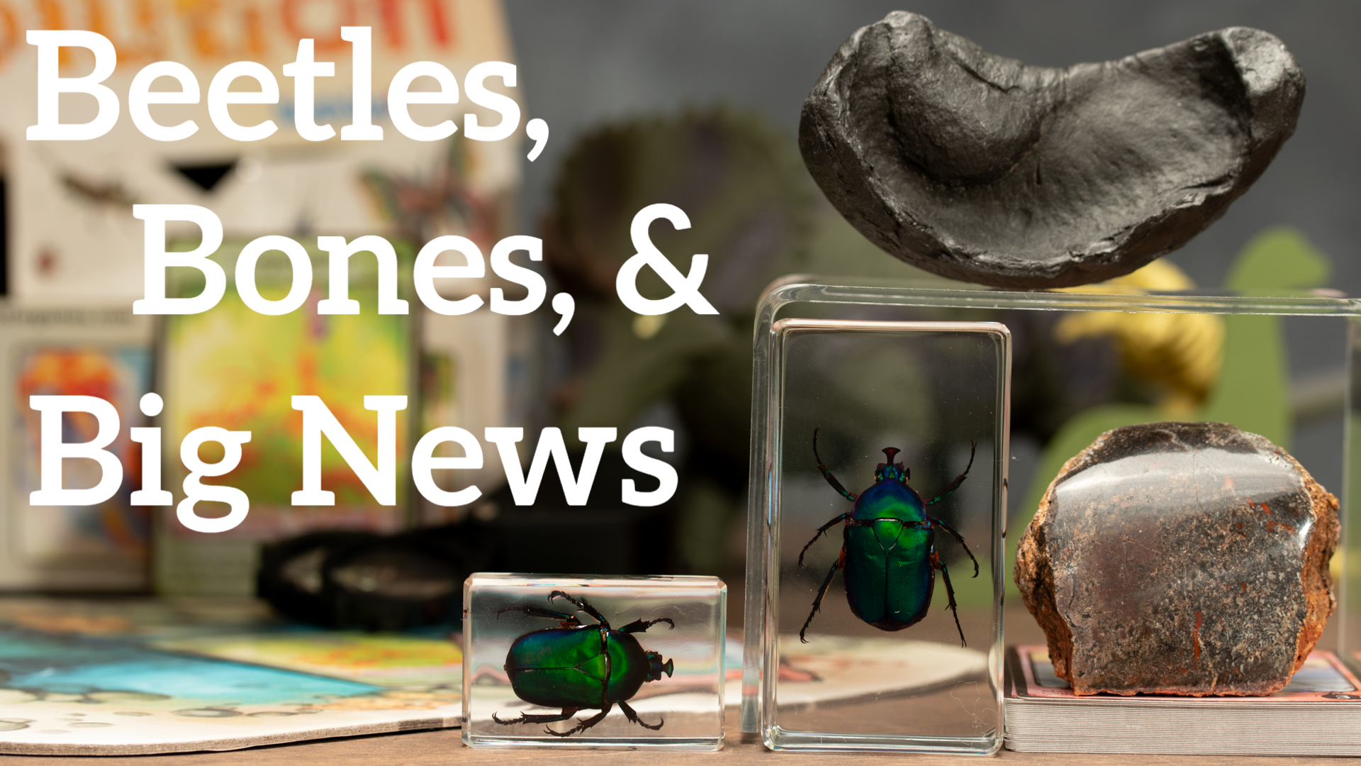 Beetles Bones and Big News!
