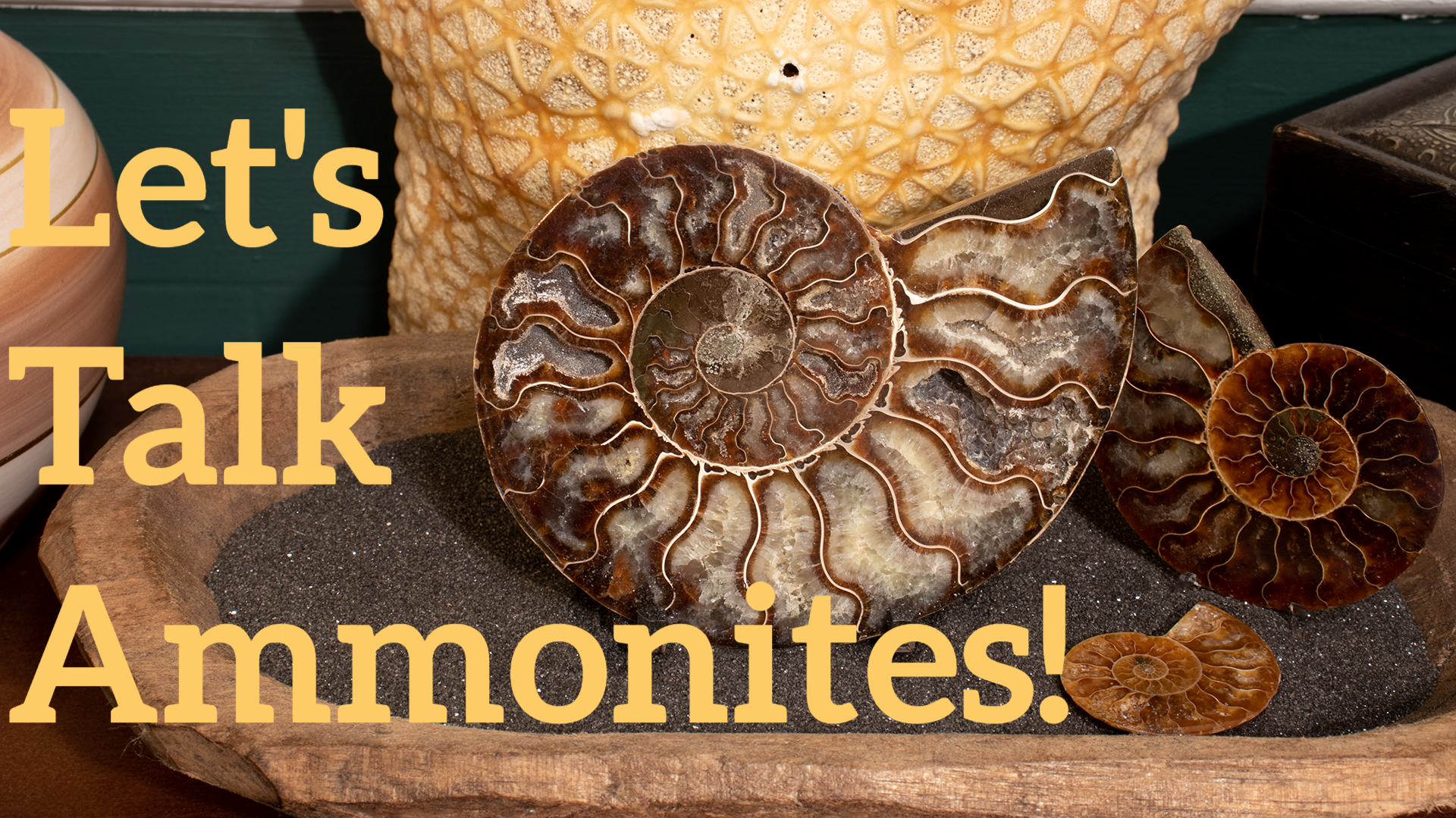 let-s-talk-ammonites-.png