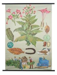 Tobacco Botanical Poster