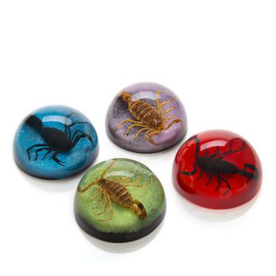 Scorpion Paperweights
