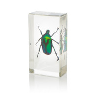 Chafer Beetle in Resin - Small