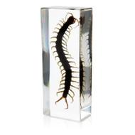 Centipede in Resin