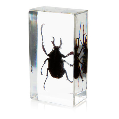 Flower Beetle in Resin