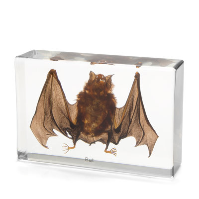 Bat Specimen in Resin