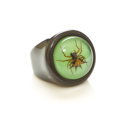 Children's Ring-Spiny Spider