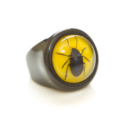 Children's Ring-Beetle