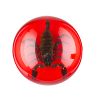 Scorpion Paperweight-X-Large-Red