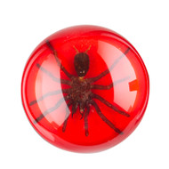 Tarantula Paperweight-Large-Red