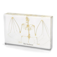 Bat Skeleton in Resin