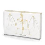 Bat Skeleton in Resin