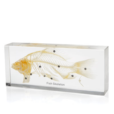 Fish Skeleton in Resin