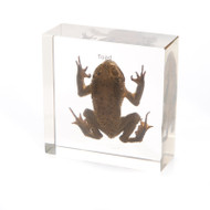 Toad in Resin