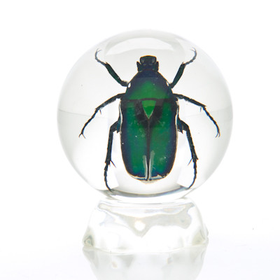 Insect Sphere - Small Green Chafer Beetle