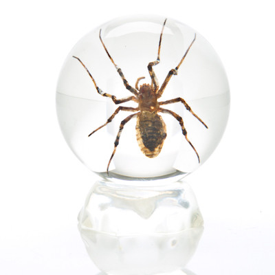Insect Sphere - Small Garden Spider