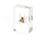 Spiny Spider