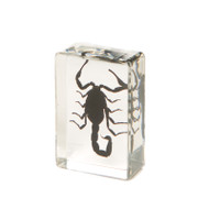 Chinese Black Scorpion in Resin