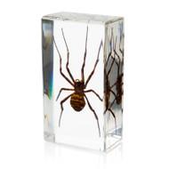Spider Medium