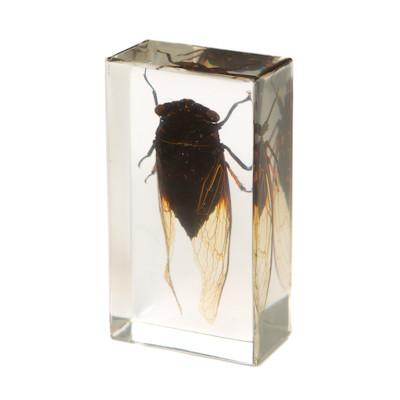 Cicada in Resin