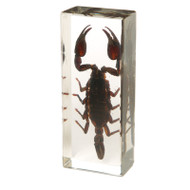 Asian Forest Scorpion in Resin