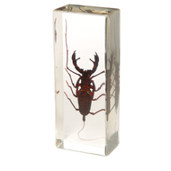 Whip Scorpion in Resin