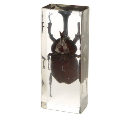 Japanese Rhinoceros Beetle in Resin