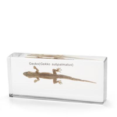 Gecko in Resin