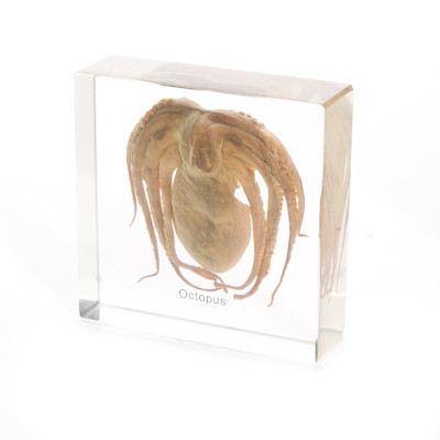 Octopus in Resin