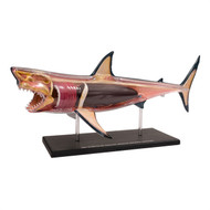 Anatomical Snap-Together Kit, Great White Shark Thumbnail