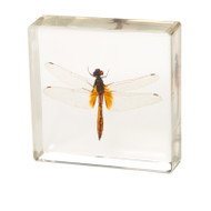 Ditch Jewel Dragonfly in Resin