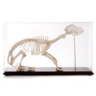Dog Skeleton