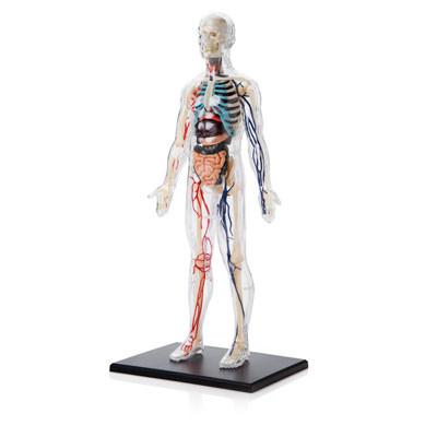 Clear Human Body