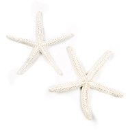 White Linkia Starfish - Seashell