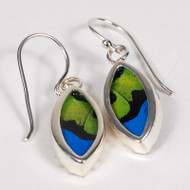 Butterfly Earrings - Ornithoptera priamus poseidon