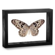 Linnaeus' Idea Butterfly - Idea idea idea